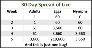 head-lice-reproduction